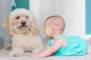 Heartwarming Photos Of Babies And Dogs That'll Turn Any Day Around